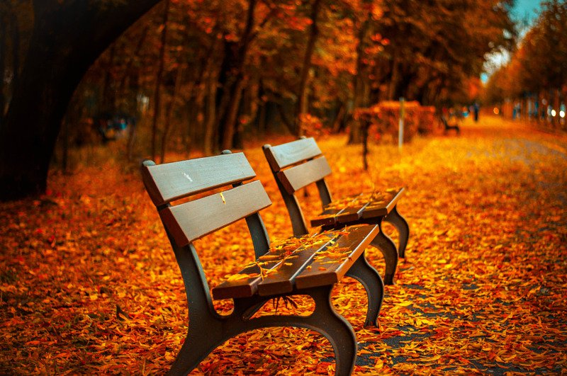 Fall Leaves with Bench
