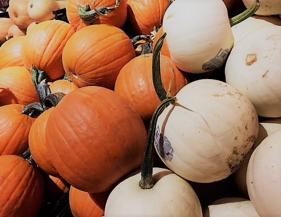 Fall Pumpkins Galore
